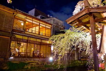 Sakura Light-up, Gion Shirakawa