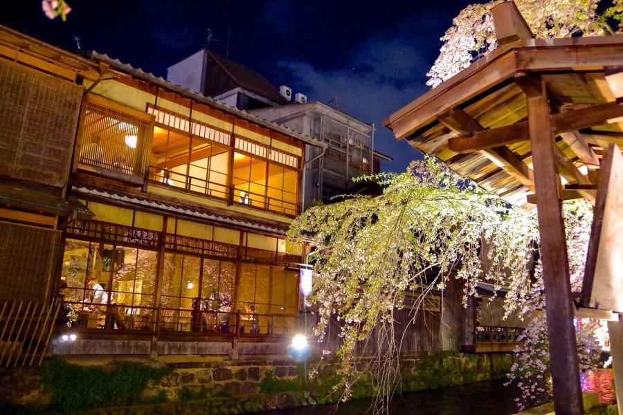 Sakura Light-up, Gion Shirakawa