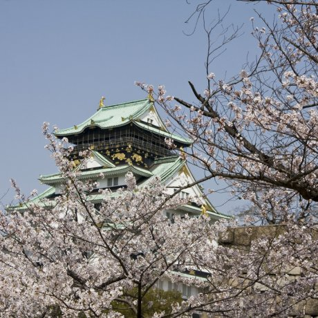Cherry Blossoms at Osaka Castle