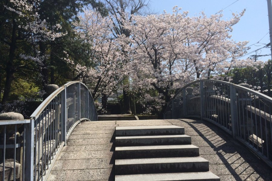 Hanami at Bairin-ji