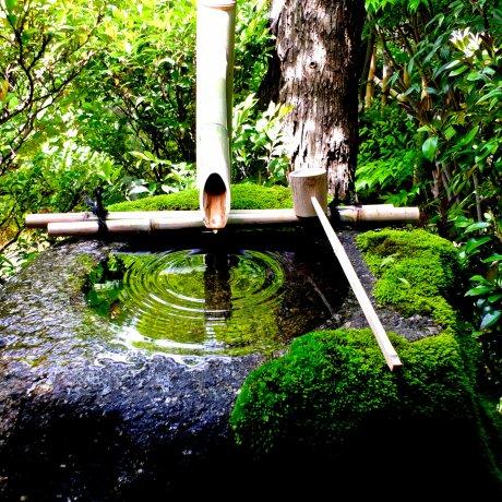 Myoshin-ji Temple & Complex - 2
