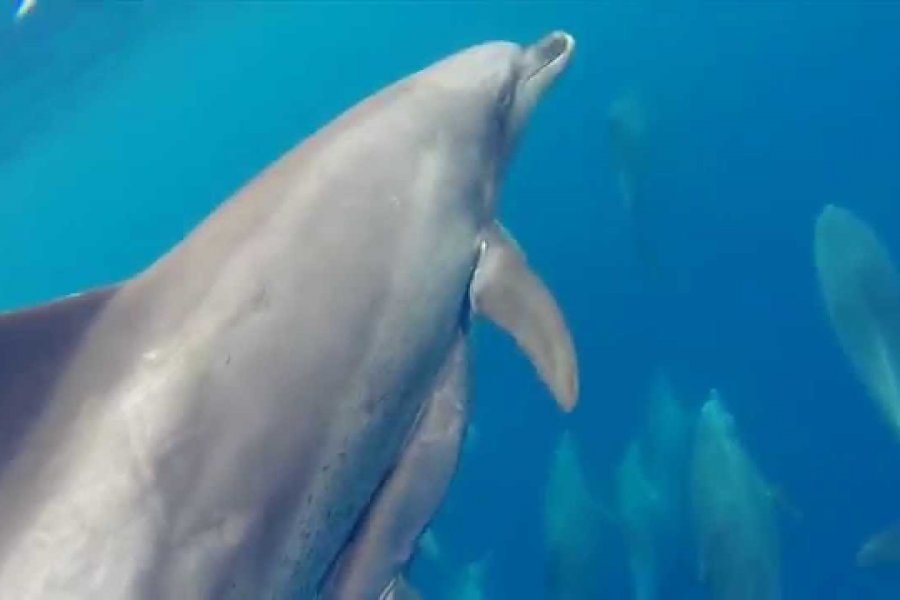 Swimming with Dolphins