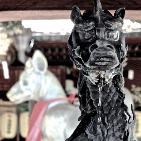 Fox Temple of Akasaka in June