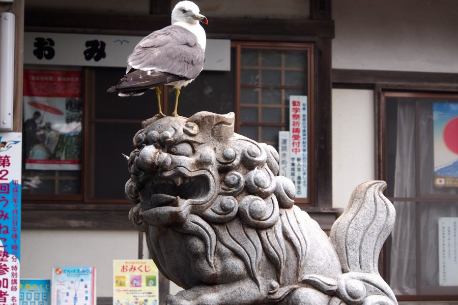 Kabushima Shrine: Seagull Island