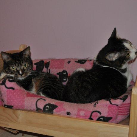 Rescue Cat and Dog Café Lua