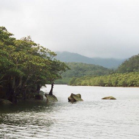 Japan's Last Jungle