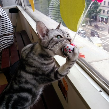 Neko Colle Cat Cafe Sendai