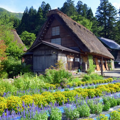 Summertime in Shirakawago