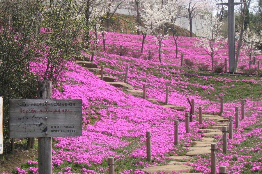 Izumi-no-Mori Park