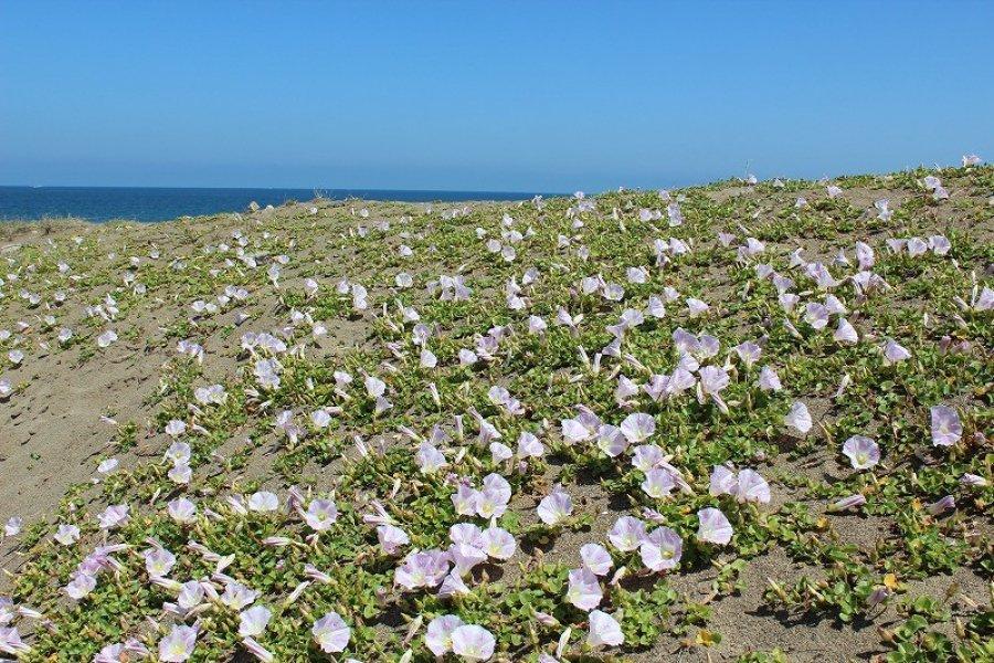 Four Seasons of Takasu Seashore