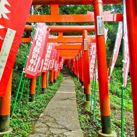 Kamakura's Sasuke Inari Shrine