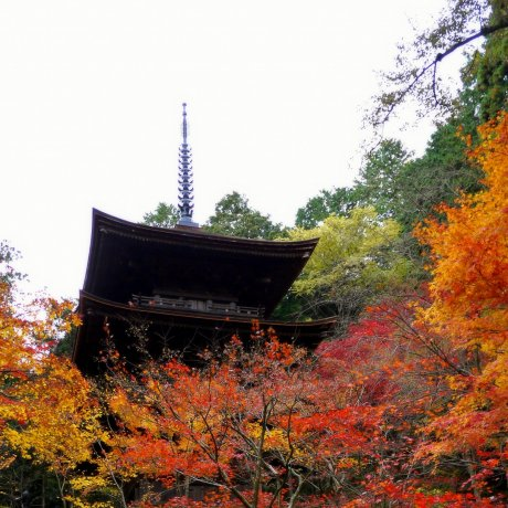 Pagoda and Main Hall at Kongorinji