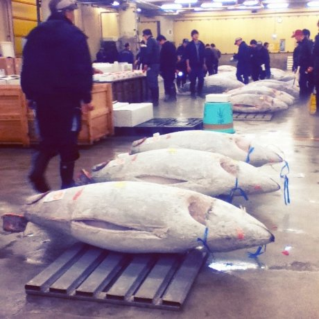 Tsukiji Fish Market [Closed]
