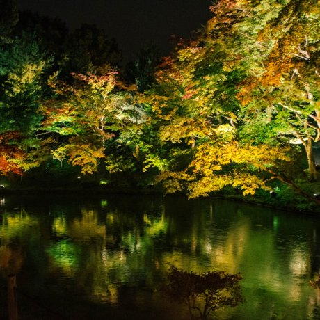 Kodai-ji Autumn Illumination