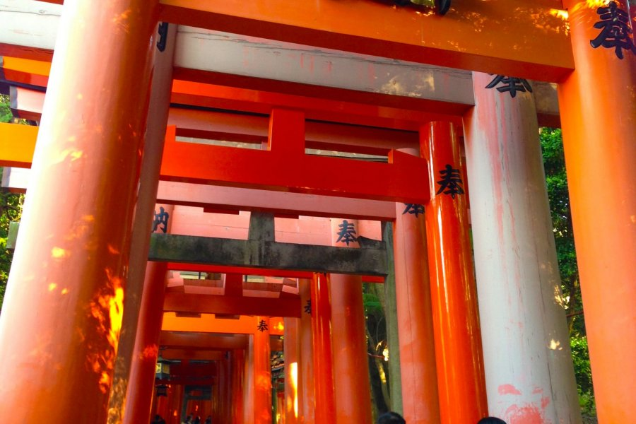 The Torii of Fushimi Inari Taisha