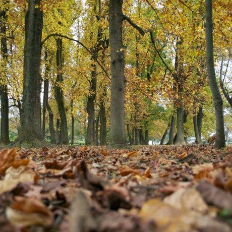 Koganei Park in Autumn