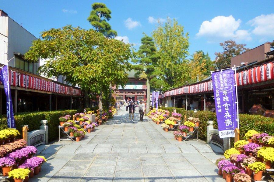 Kasama Chrysanthemum Festival