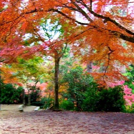 Miyajima Momijidani Park
