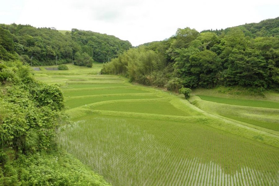 Touring Chiba's Green Landscape