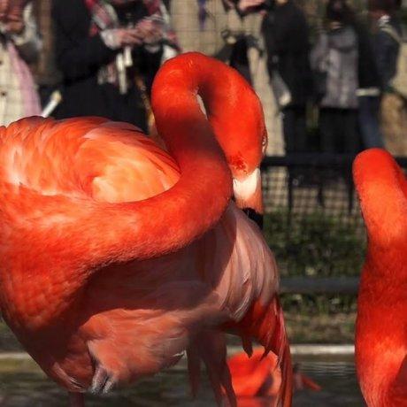 Ueno Zoo #2 – Beautiful Birds
