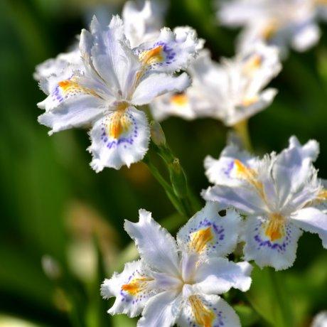 Spring Flowers at Nishiyama Park