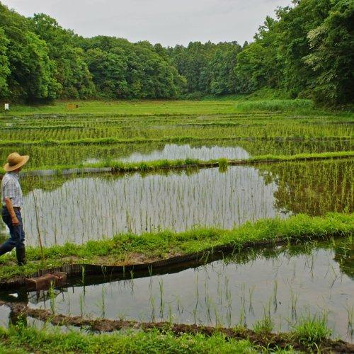 Rice Planting at Watashi-No-Inaka