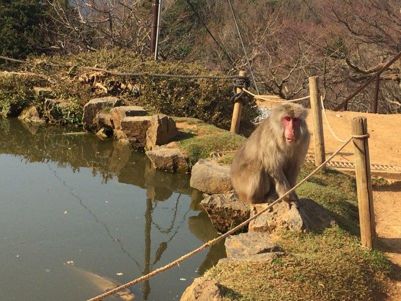 Monkey Park Iwatayama in Kyoto - Kyoto - Japan Travel - Tourism Guide, Japan ...