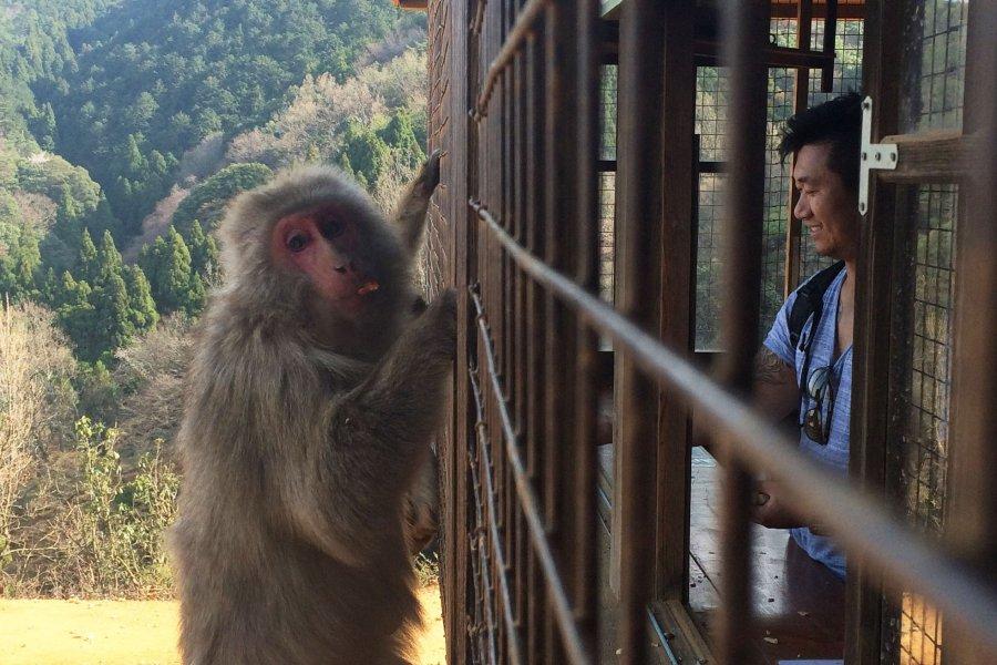 Monkey Park Iwatayama in Kyoto