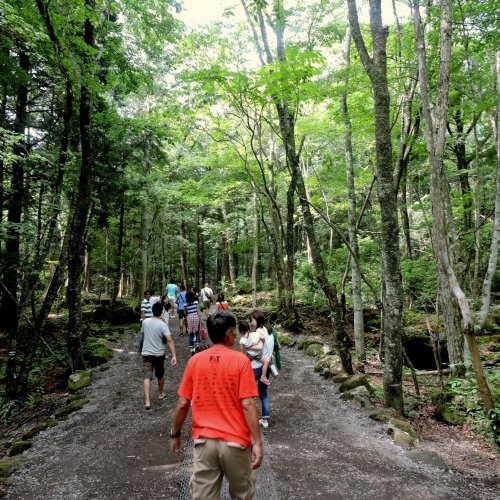 The Landscape of Aokigahara Forest