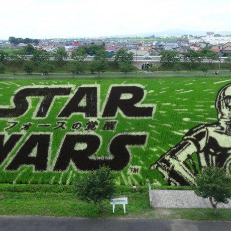 Star Wars Rice Paddy Art