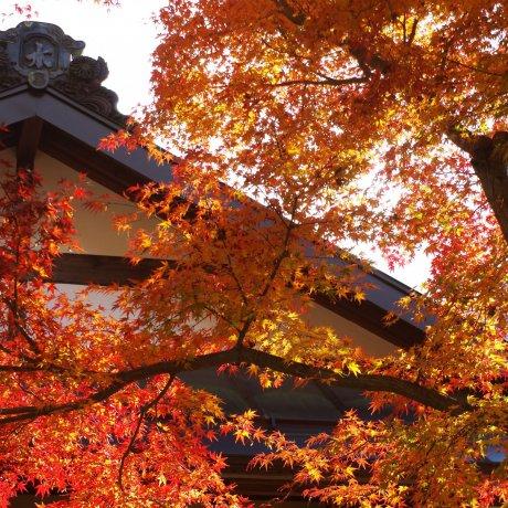The Old Inn Village of Akasawa-Juku