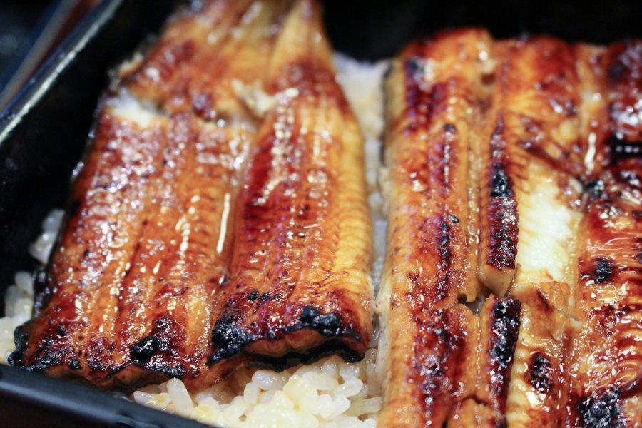 Grilled Eel at Kawatoyo