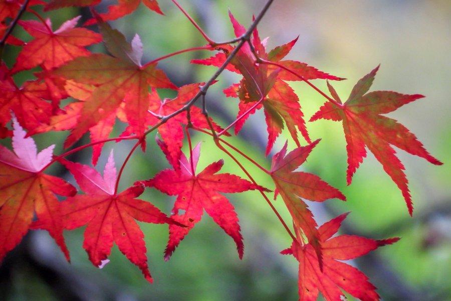 Okutama's Autumn Colors