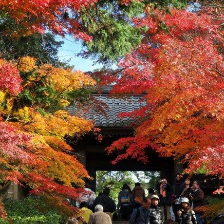 Autumn at Kamakura's Engaku-ji
