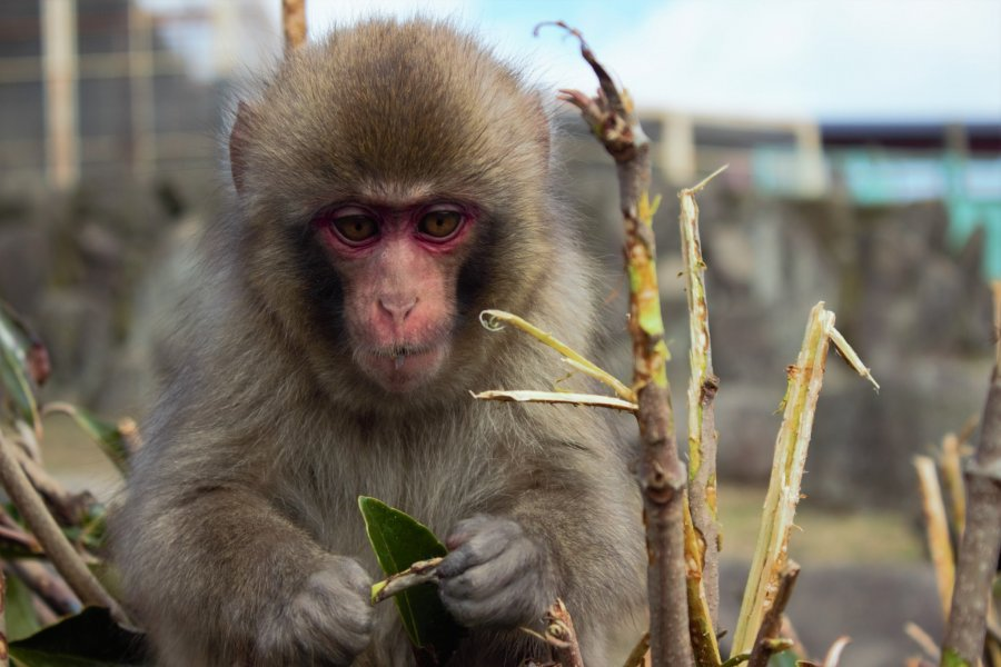 Choshikei Monkey Park