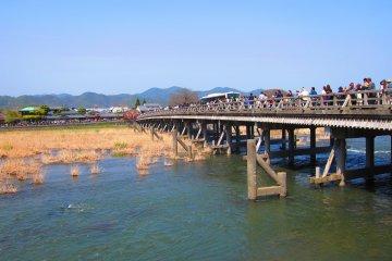 Spring in Arashiyama