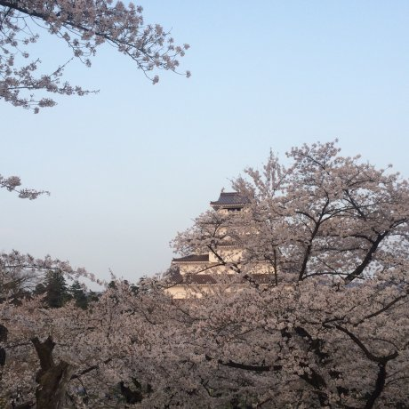 Aizuwakamatsu Castle Sakura Light-up & Annual Market