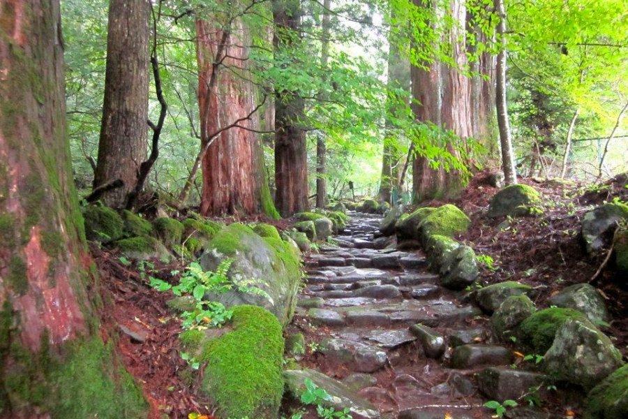 Takino-o Path in Nikko