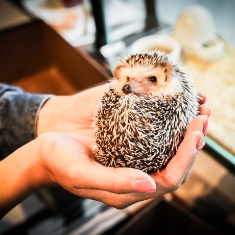 Harry Hedgehog Cafe
