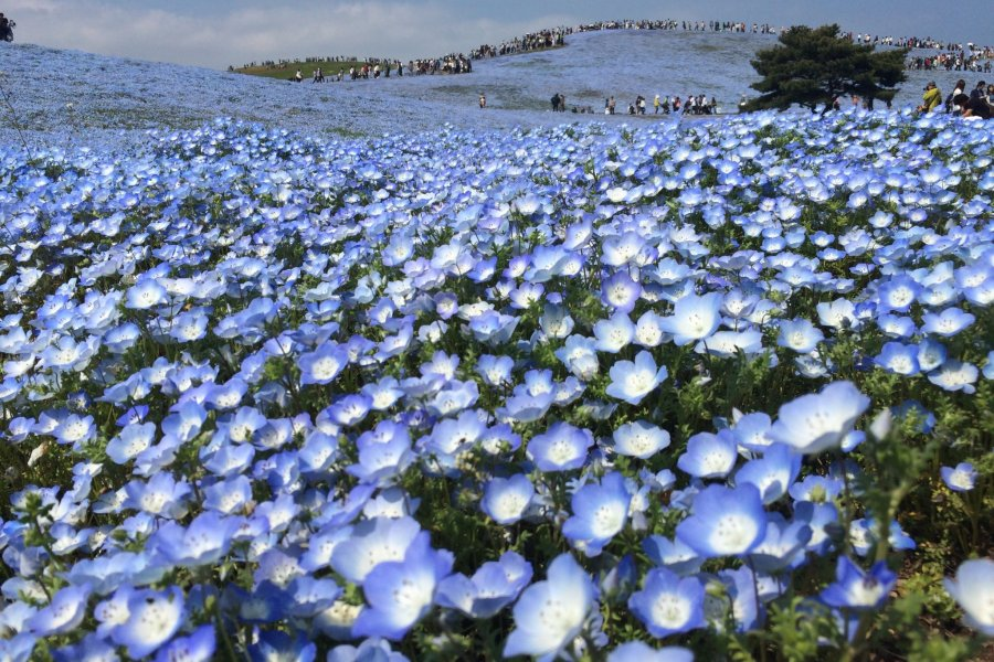 Field Of Millions Of Flowers