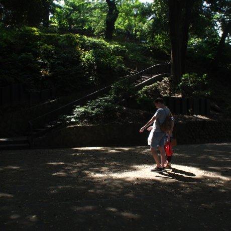 The Cicadas of Motomachi Park