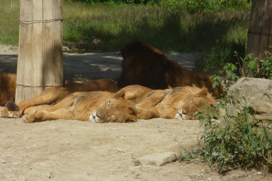 Gunma Safari Park