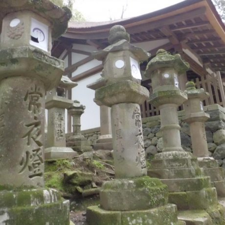 The Stone Lanterns of Kasuga Shrine