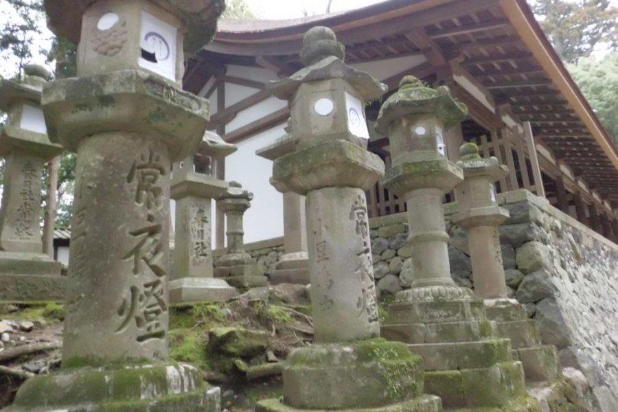 The Stone Lanterns of Kasuga Shrine