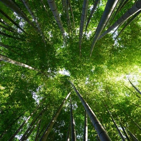 鎌倉の竹寺「報国寺」
