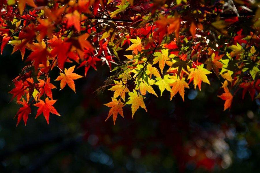 Autumn Colours in Yoyogi Park
