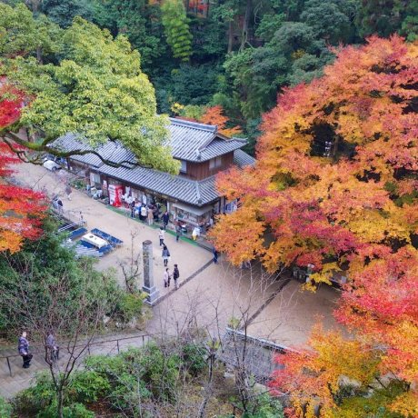 The Flaming Leaves of Engyo-ji