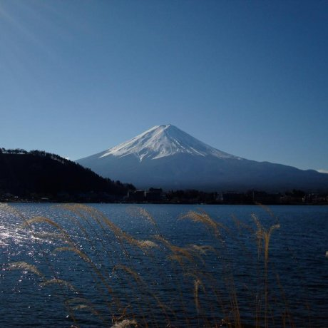 Splendid Day around Lake Kawaguchi