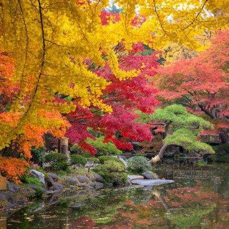 Hibiya Park in Autumn