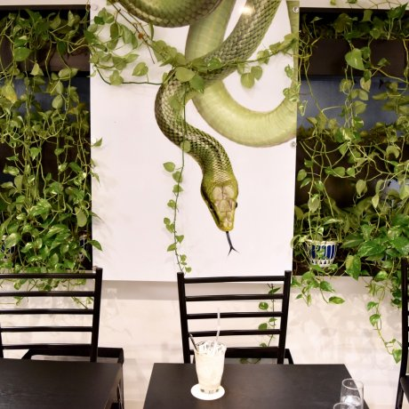 Coffee & Cobras: Tokyo Snake Center